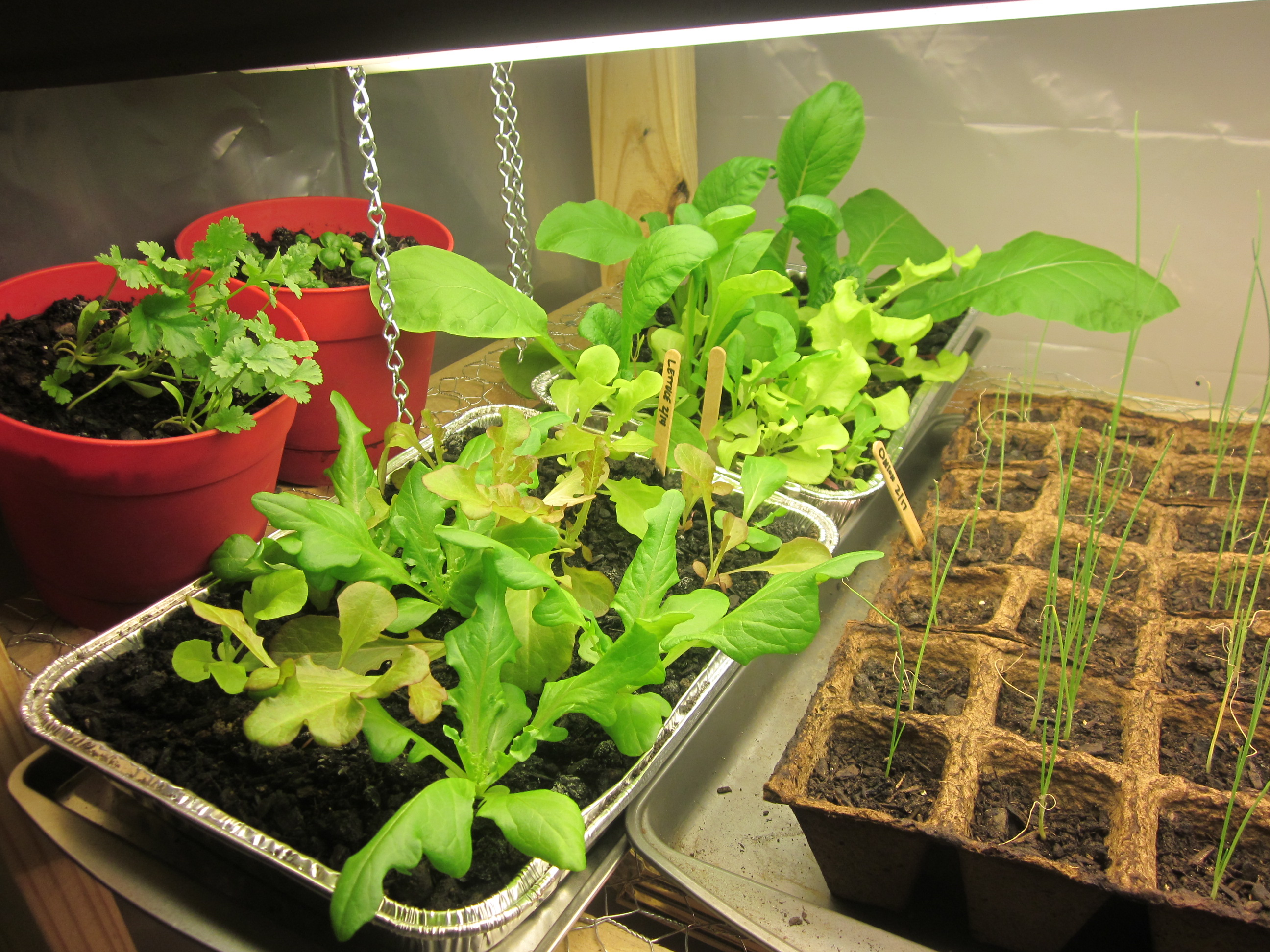 How To Make A Grow Light For Your Garage Idaho Gardening Wiring Up Lights Lettuce Onions Cilantro Basil Close