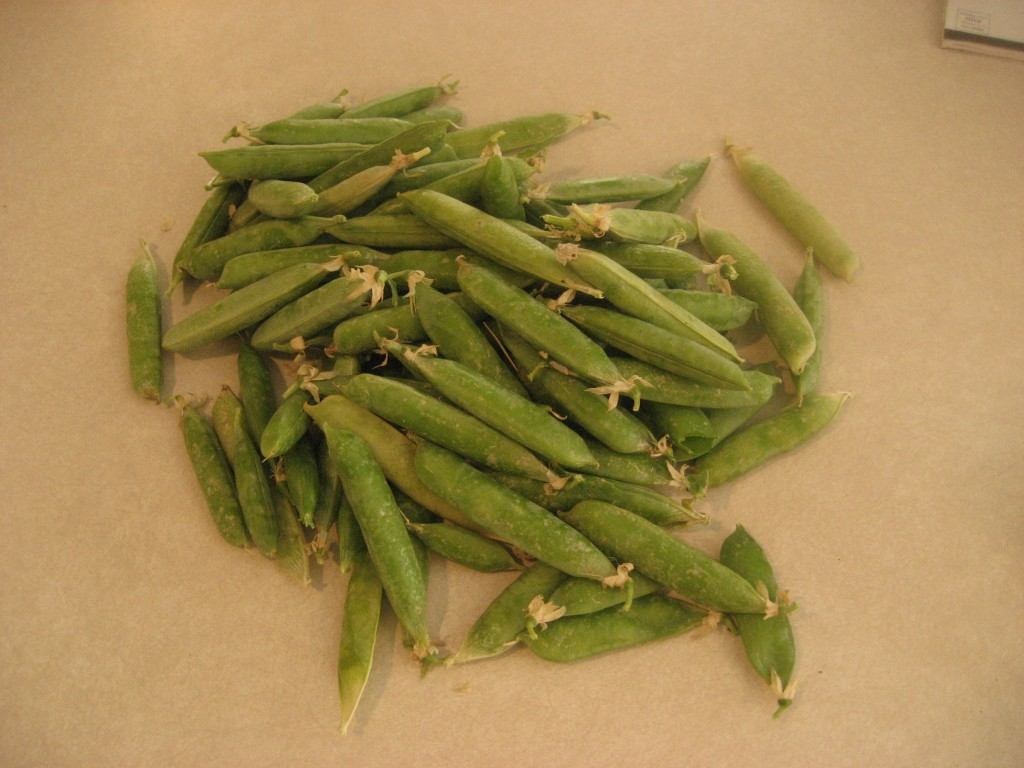 Harvested Peas