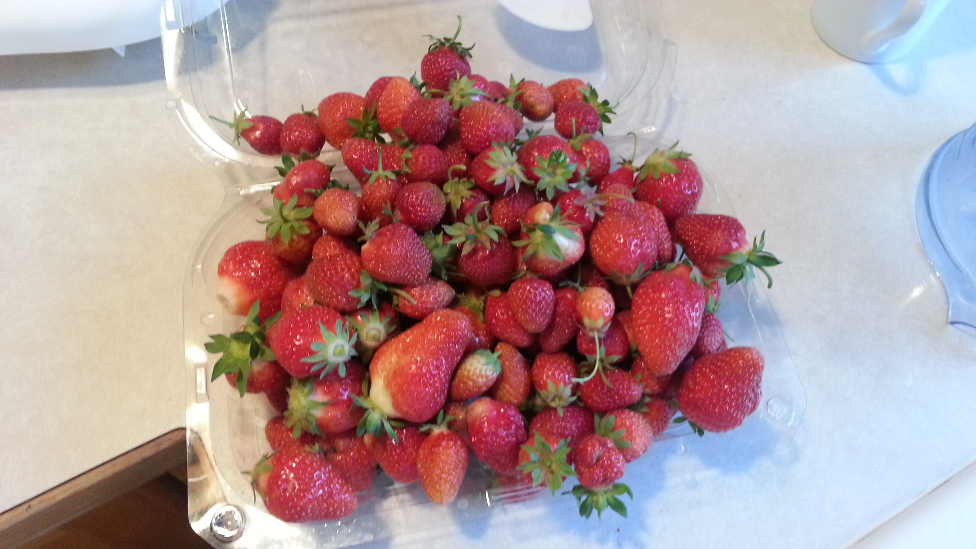 My strawberries yielded a nice harvest even though I had picked the day before!